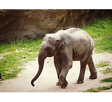 Roaming Elephant Photographic Print