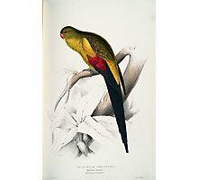 Beautiful Blacktailed Parrot Print Photographic Print