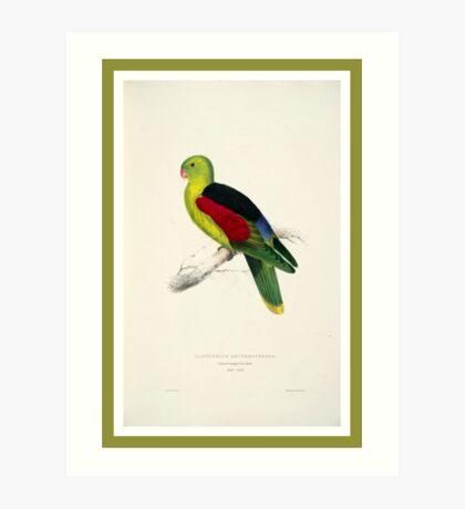 Colorful Parrot Art Print