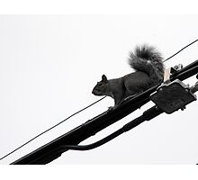 Wire Walker Photographic Print