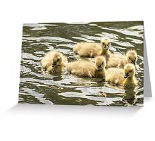 Cute duckling's  Greeting Card
