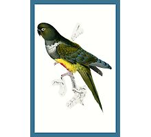 Green and Yellow Parrot Photographic Print