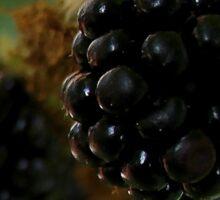 Black Berries Sticker