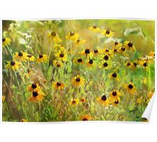Black Eyed Susans Painting Poster