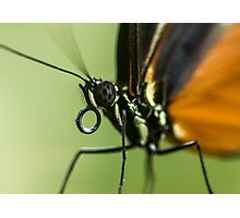 A close up of a butterfly Photographic Print