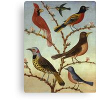 Thomas Coke Ruckle - Birds. Bird painting: cute fowl, fly, wings, lucky, pets, wild life, animal, birds, little small, bird, nature Canvas Print