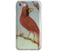 Thomas Coke Ruckle - Birds. Bird painting: cute fowl, fly, wings, lucky, pets, wild life, animal, birds, little small, bird, nature iPhone Case/Skin