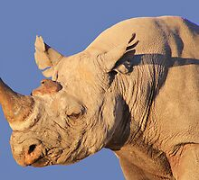 Black Rhino - Rare and Endangered Power from Wild Africa by LivingWild