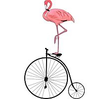 Flamingo Old Fashioned Bicycle Penny Farthing Photographic Print