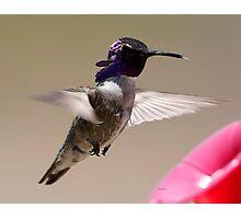 Costas Hummingbird Photographic Print