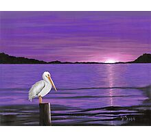 Pelican in Purple Sunset Photographic Print