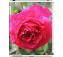 Rose in full bloom iPad Case/Skin