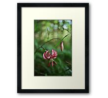 Turkish lily Framed Print