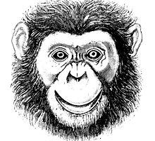 Chimpanzee Face by Zehda