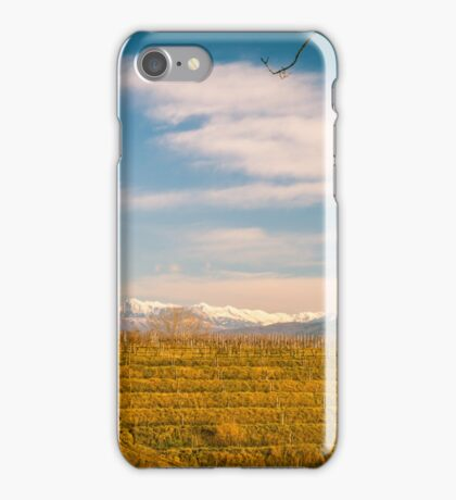 Vineyard in late winter iPhone Case/Skin