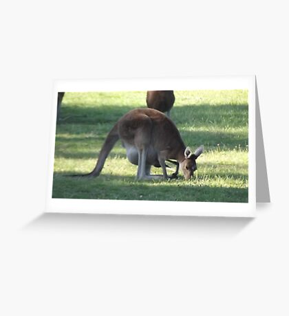 Australian Kangaroo Greeting Card