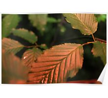 Red Tinted Leaves Poster