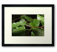 Green Leaves With Black Background Framed Print