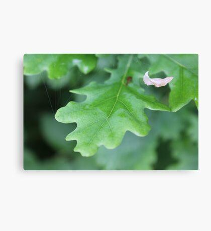 Oak Leaves and White Leaf Canvas Print
