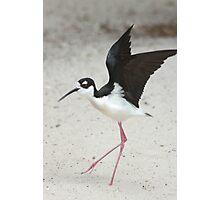 Stilt takes flight Photographic Print