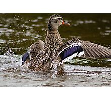 Water off a duck's back Photographic Print