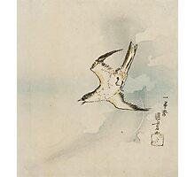 Utagawa Kuniyoshi - Hototogisu. Bird painting: cute fowl, fly, wings, lucky, pets, wild life, animal, birds, little small, bird, nature Photographic Print