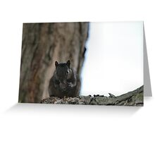 Stealth Snacker Greeting Card