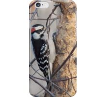 Downy Woodpecker iPhone Case/Skin