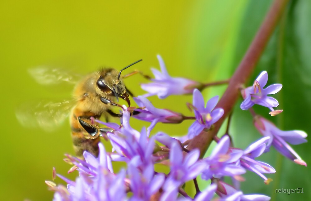 Bee on flowers by relayer51