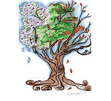Magnolia's Seasons Photographic Print