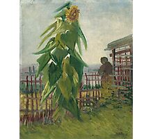 Vincent Van Gogh - Allotment With Sunflower. Country landscape: village view, country, buildings, house, rustic, farm, field, countryside road, trees, garden, flowers Photographic Print
