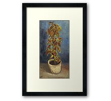 Vincent Van Gogh - Flame Nettle In A Flowerpot. Still life with flowers: blossom, nature, botanical, floral flora, wonderful flower, plants, cute plant for kitchen interior, garden, vase Framed Print