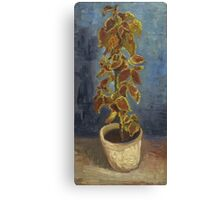 Vincent Van Gogh - Flame Nettle In A Flowerpot. Still life with flowers: blossom, nature, botanical, floral flora, wonderful flower, plants, cute plant for kitchen interior, garden, vase Canvas Print