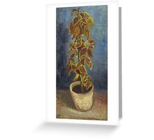 Vincent Van Gogh - Flame Nettle In A Flowerpot. Still life with flowers: blossom, nature, botanical, floral flora, wonderful flower, plants, cute plant for kitchen interior, garden, vase Greeting Card