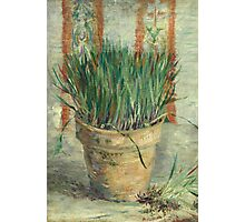 Vincent Van Gogh - Flowerpot With Garlic Chives. Still life with flowers: blossom, nature, botanical, floral flora, wonderful flower, plants, cute plant for kitchen interior, garden, vase Photographic Print