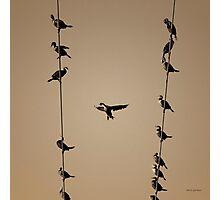 Cormorants at Twilight Toned Photographic Print