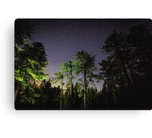 Quiet night in a pine forest Canvas Print