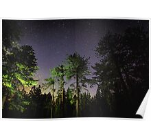 Quiet night in a pine forest Poster