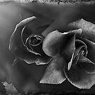 The Black Rose by Linda Cutche