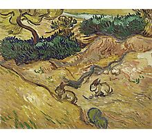 Vincent Van Gogh - Landscape With Rabbits. Field landscape: field landscape, nature, village, garden, flowers, trees, sun, rustic, countryside, sky and clouds, summer Photographic Print