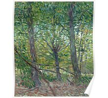 Vincent Van Gogh - Trees. Forest view: forest , trees,  fauna, nature, birds, animals, flora, flowers, plants, field, weekend Poster