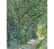 Vincent Van Gogh - Path In The Woods. Forest view: forest , trees,  fauna, nature, birds, animals, flora, flowers, plants, field, weekend Photographic Print