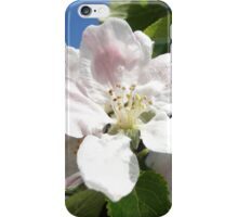 Apple Blossom iPhone Case/Skin