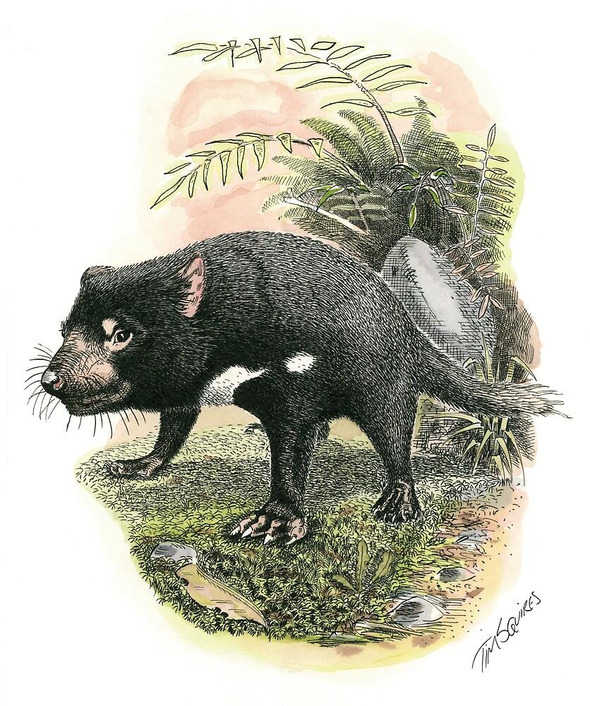 Tasmanian Devil by Tim Squires