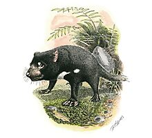 Tasmanian Devil Photographic Print