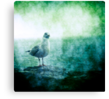 See the Seagull Canvas Print