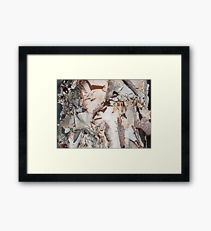 The Details of a Birch Tree Framed Print