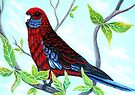 Enjoying the View - Rosella by Linda Callaghan