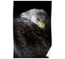 America Painted Eagle  Poster