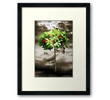 Rose Tree Red Framed Print